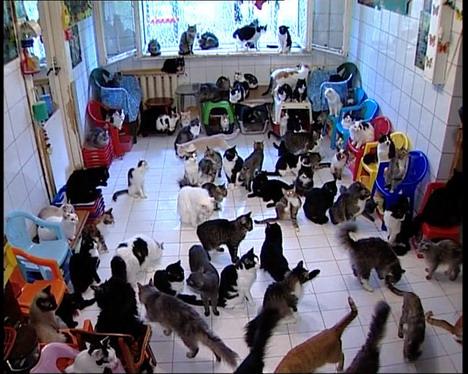 130-cats-1.jpg