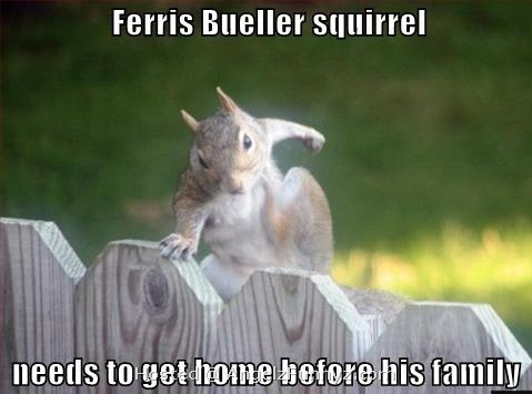 Ferris%20Bueller%20Squirrel.jpg